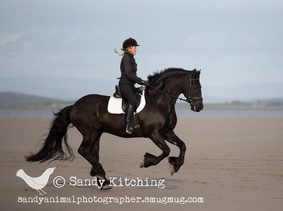 Friesian Beach Ride Hoitze & Ellis Apr 2015