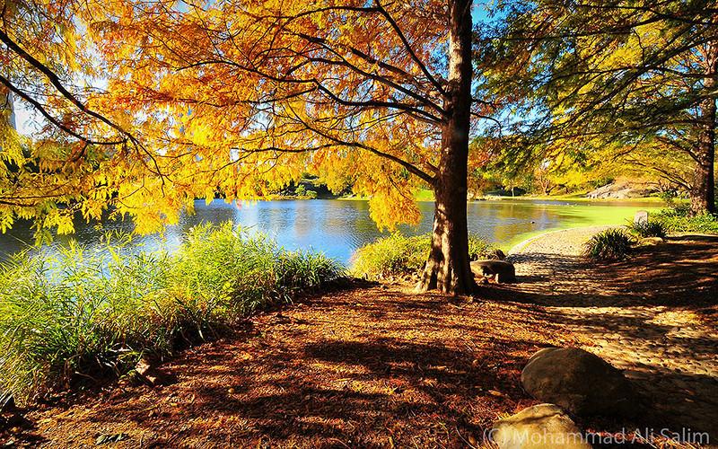 Autumn Morning edit web.jpg