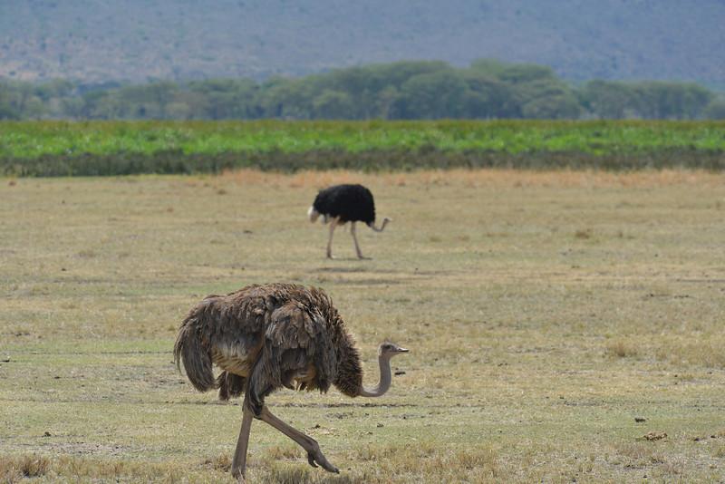 East Africa Safari 420.jpg