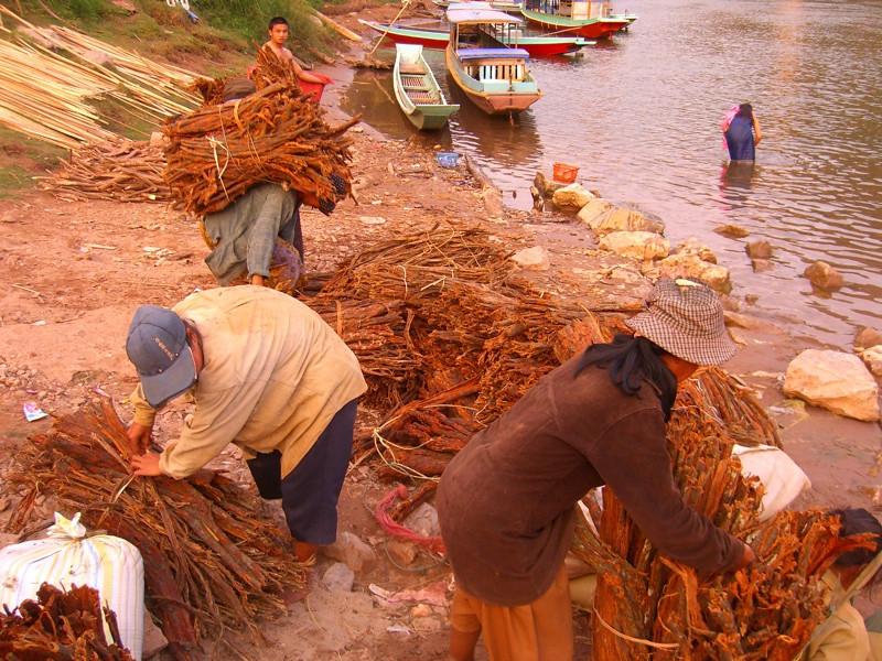 Men with Bundles of Sticks - Nong Khiaw, Laos