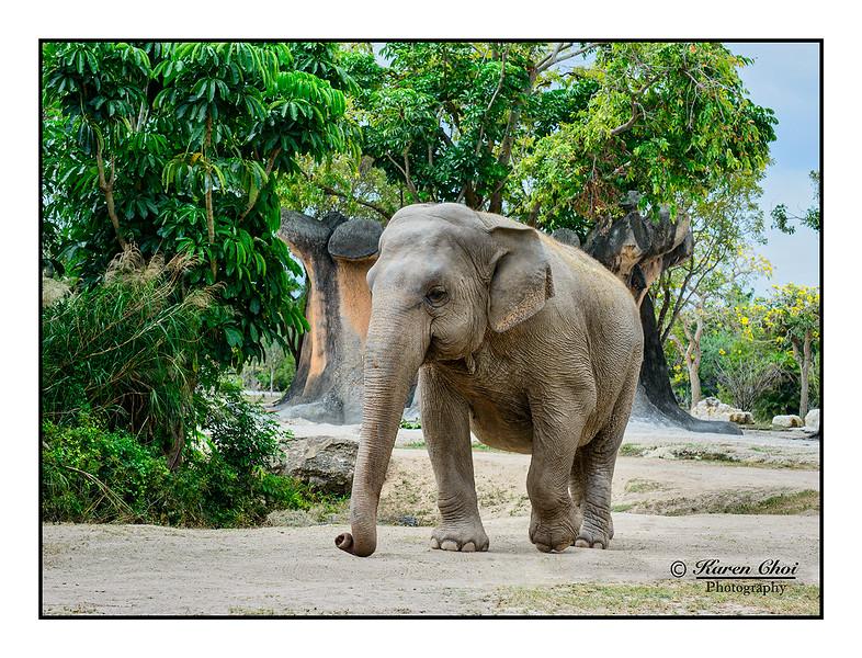 Elephant Walking sm.jpg