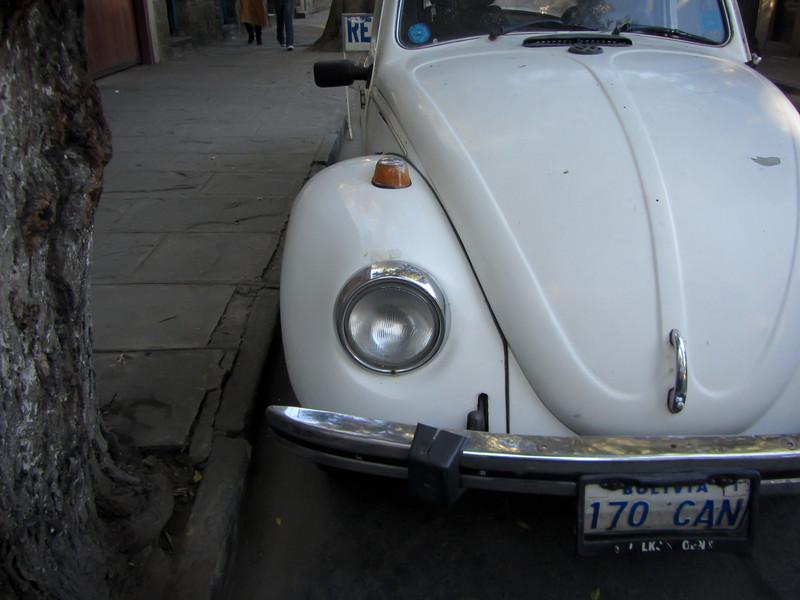 Tupiza 201205 Bugs 03.jpg