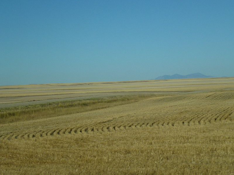 On the border of Alberta and Montana its all wheat farming
