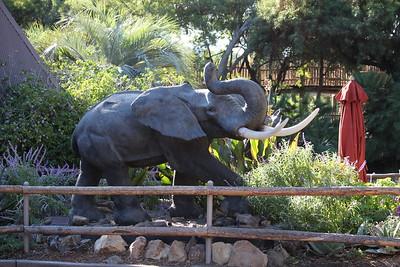 SD Wild Animal Park 2018-11-15