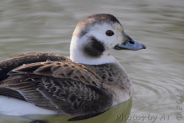 Birding 2014 March