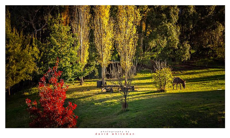 Autumn Scene Carcoar
