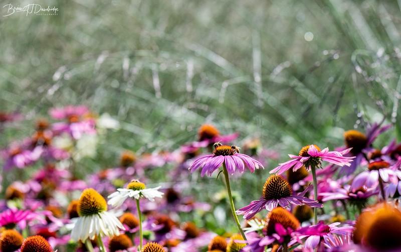 500_Sussex Prairie Gardens-3619.jpg
