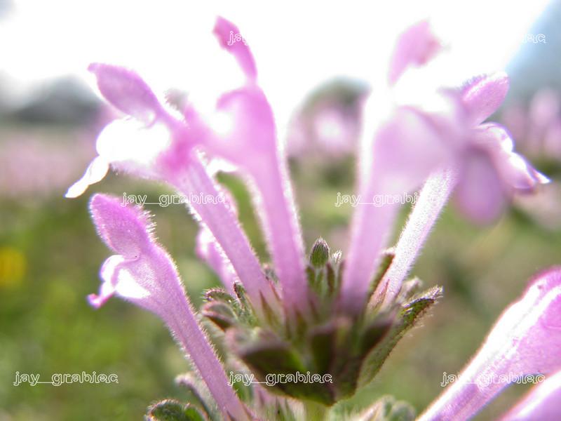 20100407_Flowers03.JPG