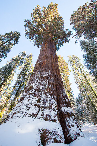 Giant Sequoia-6925.jpg