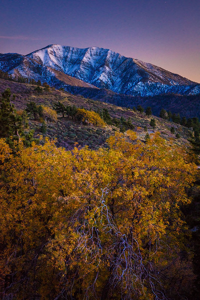 Mt Baldy Snow Fall Foliage Display
