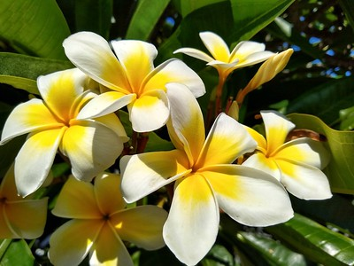 Brigette's Flowers
