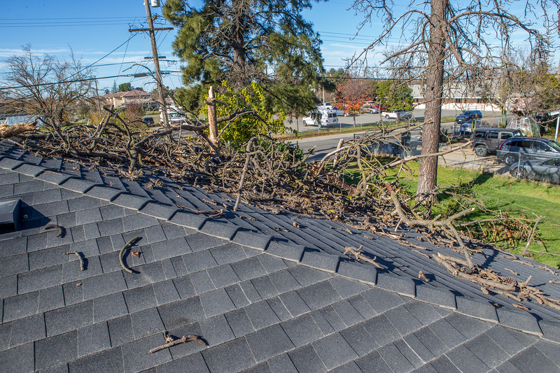 5671 Wallace Ave - Tree 1030am 12 16 2017 Extremly Windy Conditions-81.jpg