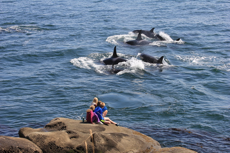 Mother and children sitting on a rock watching a pod of orcas play in the Salish Sea.