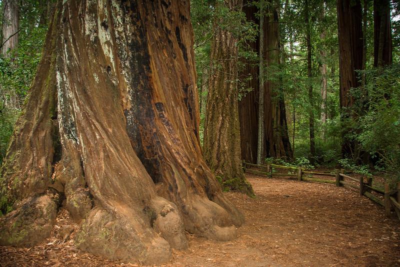 Redwood-30.jpg