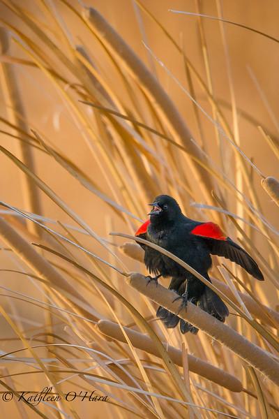 Birds of the Pacific Flyway