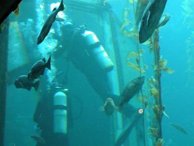 2002-10-20 Monterey Bay Aquarium