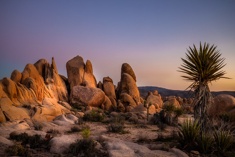 March 8 - Cloudless susnet at Joshua Tree National Park.jpg