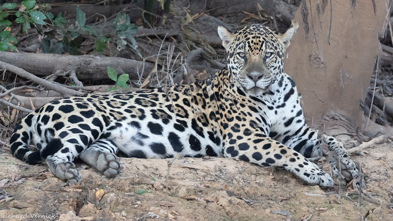 Pantanal 2019