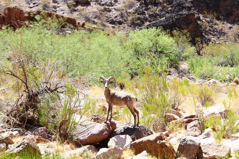 2014_Grand_Canyon_WHDW2_7D 35