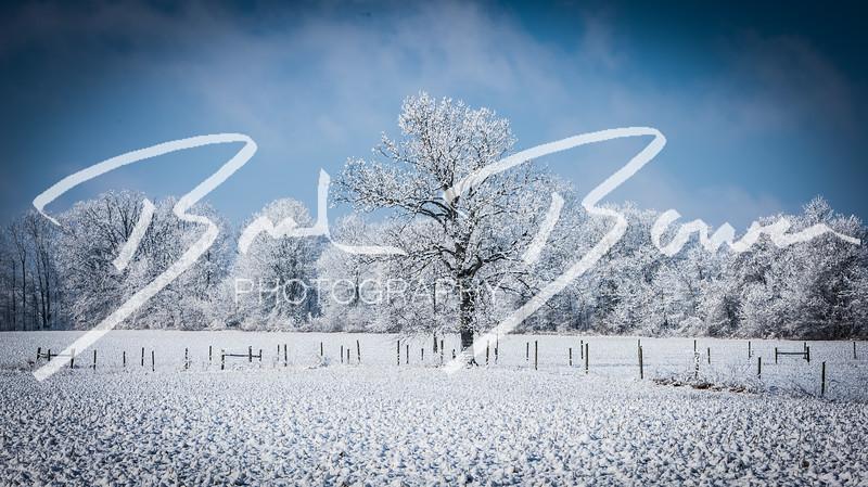 snow-91.jpg