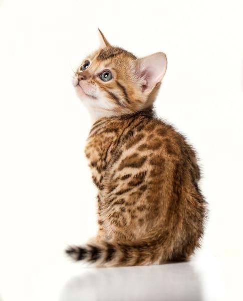 Kittens-181-Edit.jpg