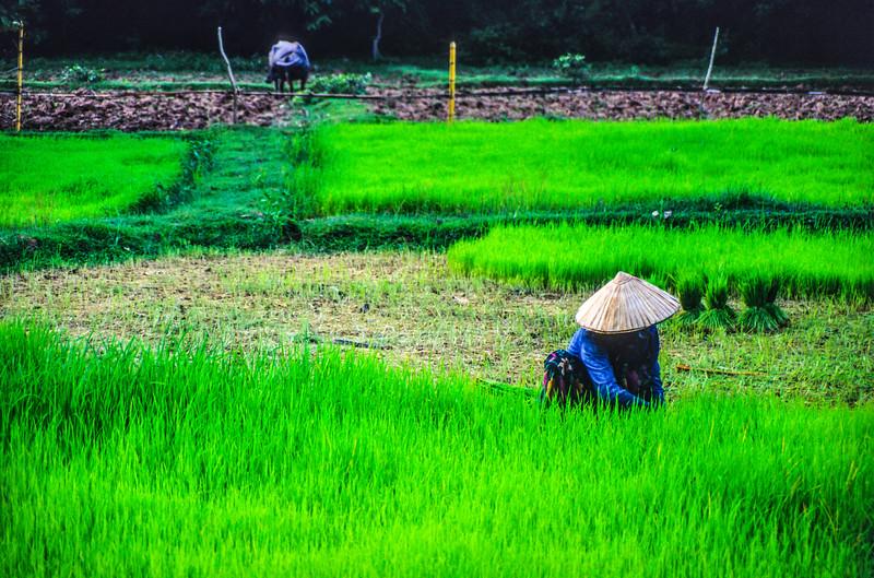 20121207-20121207-laos_10.jpg