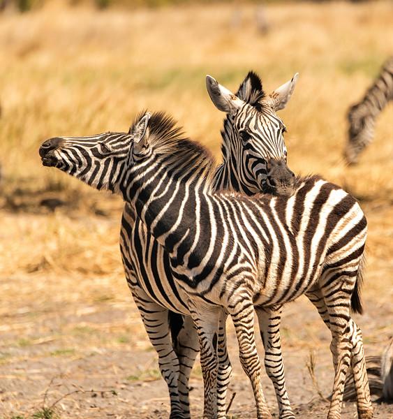 2014-08Aug-Okavango Masters-46-Edit.jpg