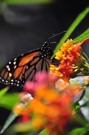 Balboa Park butterflies 3.7.15