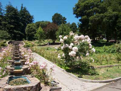 2011-05-24 (Oakland Rose Garden)
