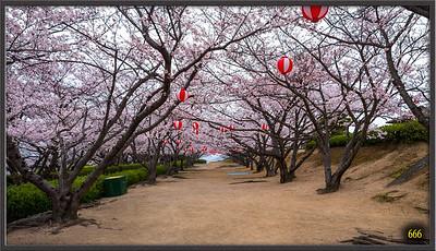 Japon 2015 Sakura