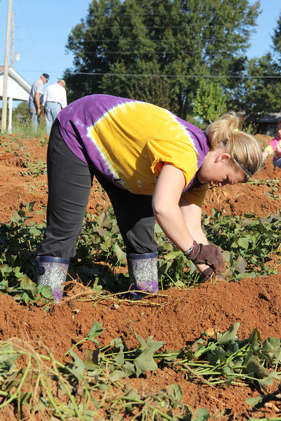 Students spend their Saturday helping with the Potato Project.