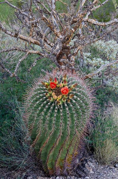 20180902-Saguaro-NP-East-4277.jpg