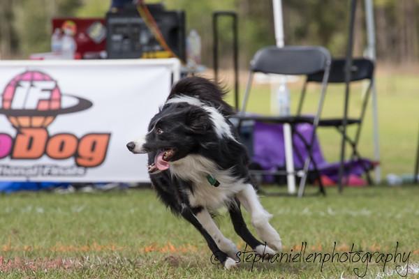 _MG_3096Up_dog_International_2016_StephaniellenPhotography.jpg