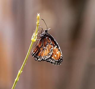 Butterfly Garden, Washington, DC