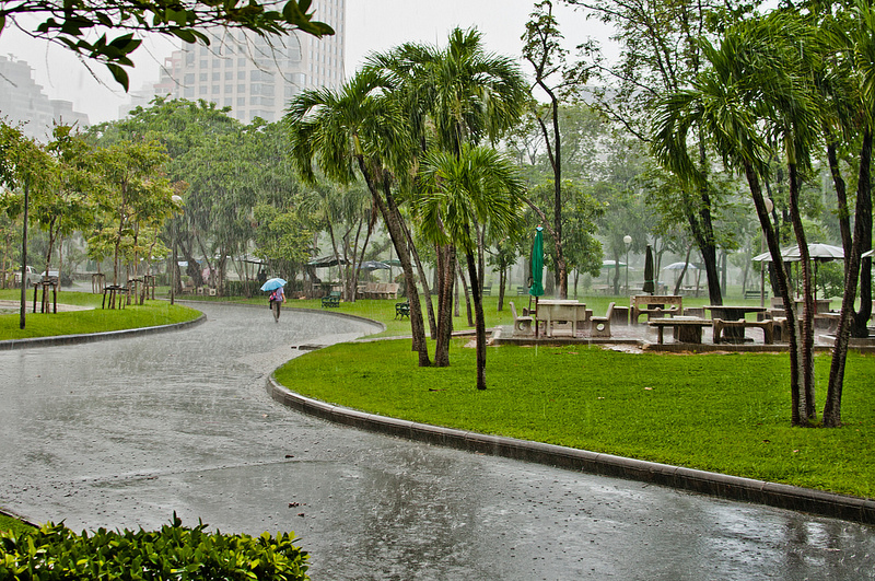 Lumpini in the Rain