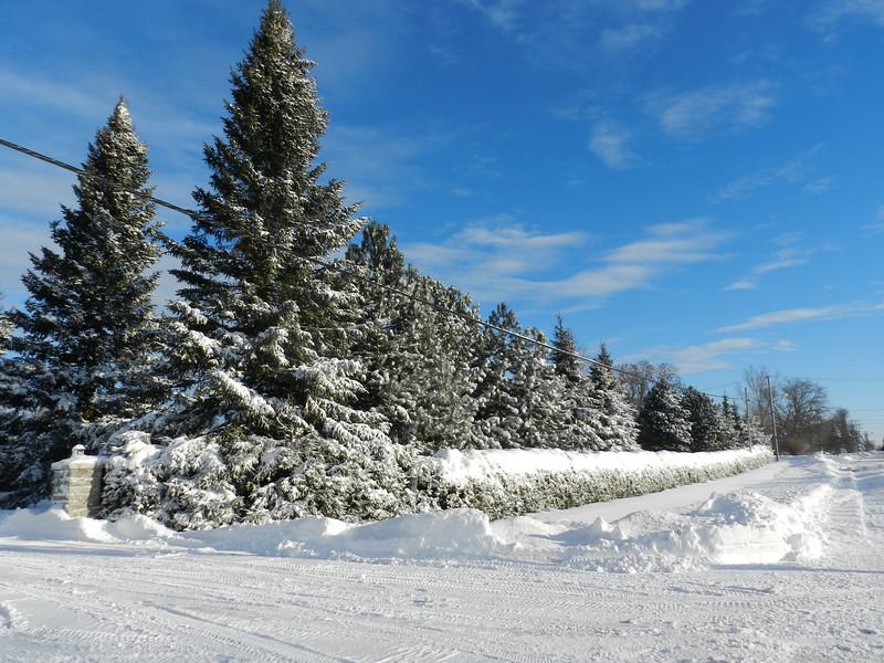 fantastic snow-7153.jpg