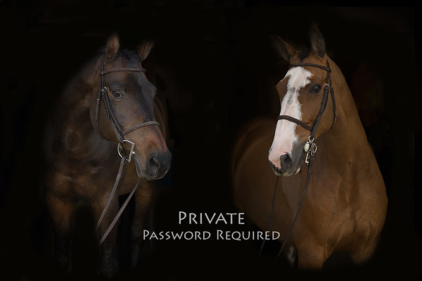 Stockard Portraits