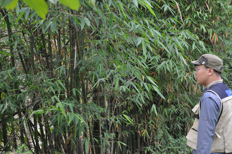 As I said: bamboo grows everywhere...!  That's Lida looking at the bamboo.