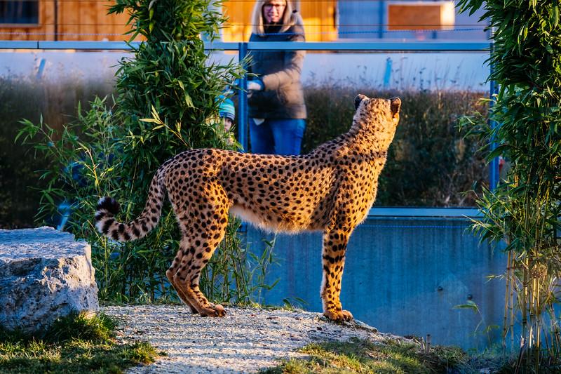 Tonis Zoo-0201.jpg