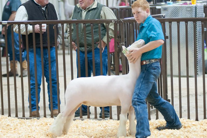 kay_county_showdown_sheep_20191207-46.jpg