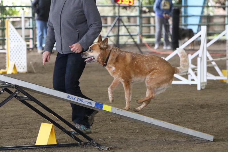 3-10-2019 Bloodhound-9712.jpg