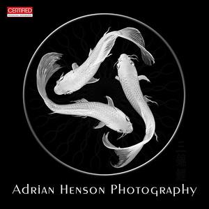 Adrian Henson Photography - New Bern, NC
