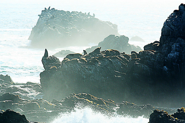 Point Lobos, near Monterey California