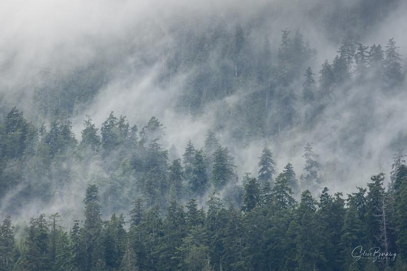 Quinalt Rain Forest II