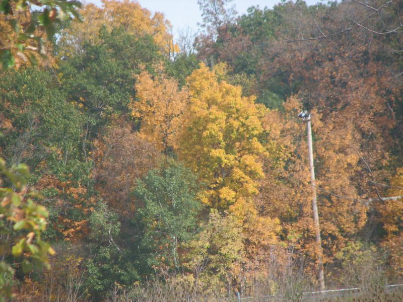Fall pics 2008 027.jpg