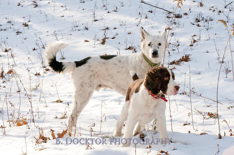 Hooly & Justy Jan 09-14.jpg