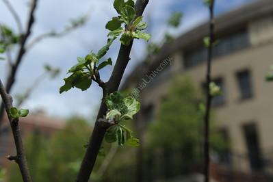 30828 - Newton Tree Rockefellar Announcement