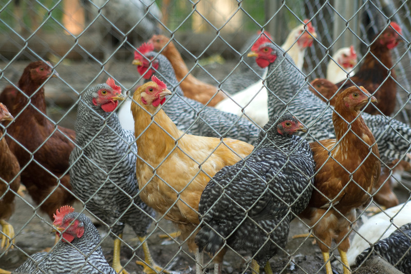 Swift Farm 0452.jpg