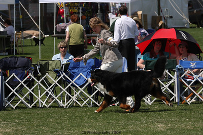 Bred By Exhibitor Dog BMDCA 2008a