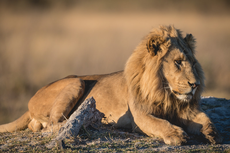 Botswana_June_2017 (1413 of 6179).jpg